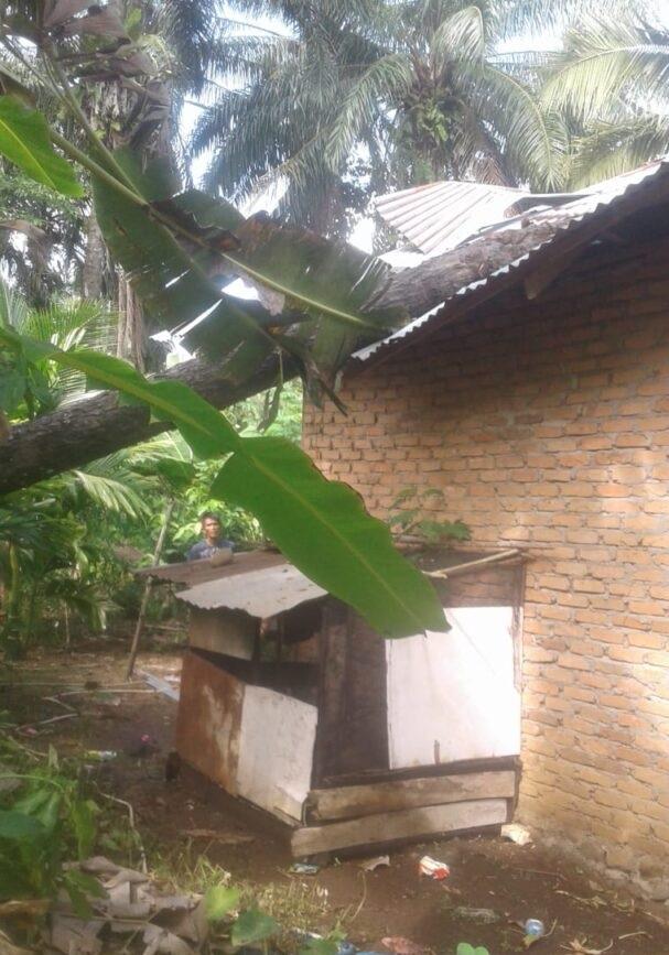 Akibat Angin Kencang, Rumah Warga Tiku Rusak Berat Tertimpa Pohon Kelapa Sawit