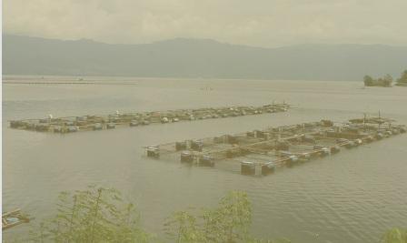 Kementrian Lingkungan Hidup Sediakan RP470 Miliar Untuk Pembenahan Danau Maninjau