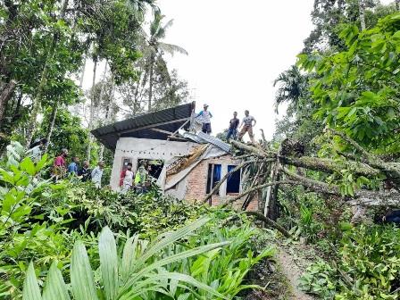 Pohon Manggie Menimpa Satu Rumah Warga Palupuh Akibat Angin Kencang
