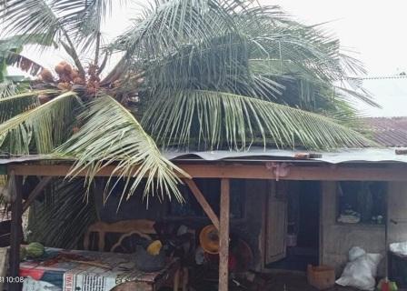 Rumah Warga  Di Lubuk Basung Tertimpa Pohon Akibat Cuaca Ekstrem