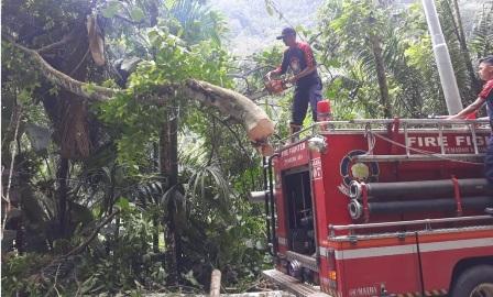 Terjangan Angin Kencang Menyebabkan Pohon Tumbang, Akses Jalan Lubuk Basung - Bukittinggi Terputus