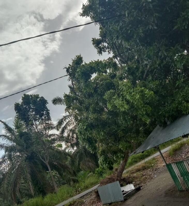 Warga Muaro Putuih Tanjung Mutiara